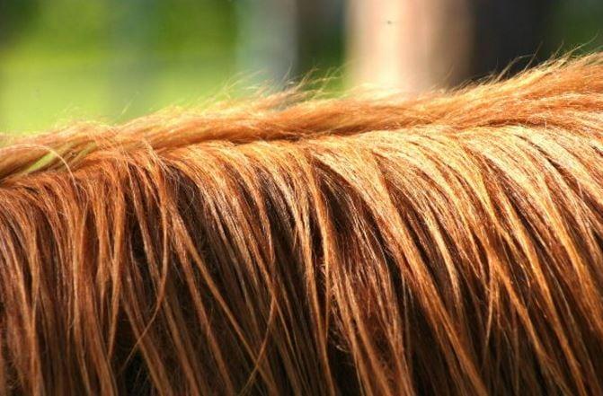 Florida Veterinary Action against Horse Vet Scott Langton, DVM