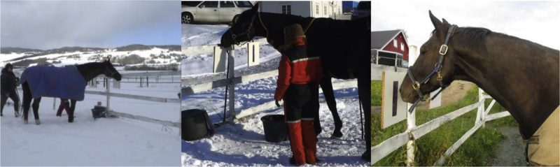 Horses use Symbols to Communicate Preferences