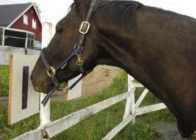 Horses use Symbols to Communicate Preferences