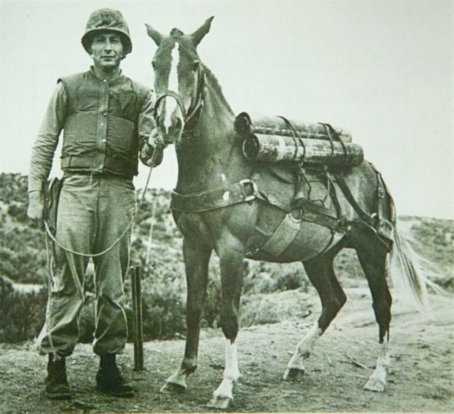 The little horse that was a war hero.