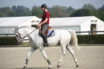 Equine veterinarians agree: Healthy topline can help reduce injury and contribute to overall well-being