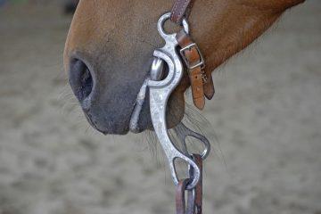 western-horse-bit