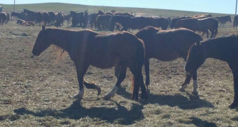 Karen Sussman wild horse allegations of neglect