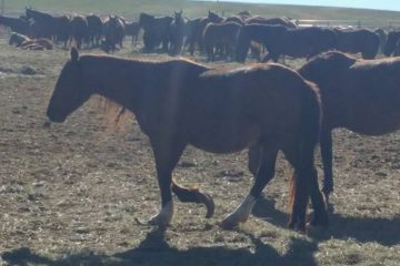 Karen Sussman wild horse allegations of neglect