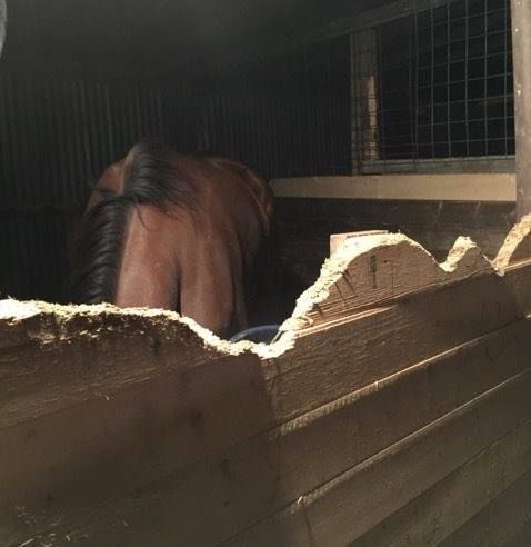 Caren Brown's horses seized in Texas