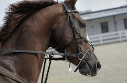 Economic Impact of Horses on Horse Industry