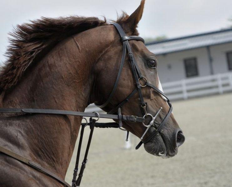 Economic Impact of Horses on Horse Industry