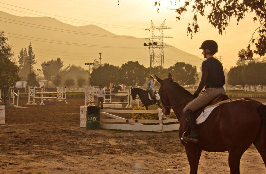ehv 1 outbreak at la equestrian center leads to cancellation of 2016 equifest