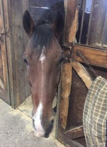Ozzie Missing after Fire at Maffitt Lake Equestrian Center