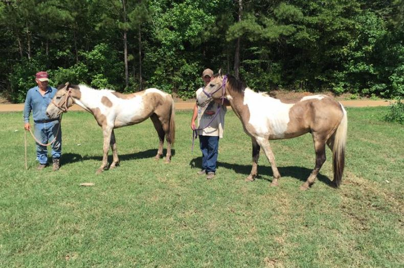 18 Horses Seized From Thompson Kill Pen For Alleged Neglect Horse