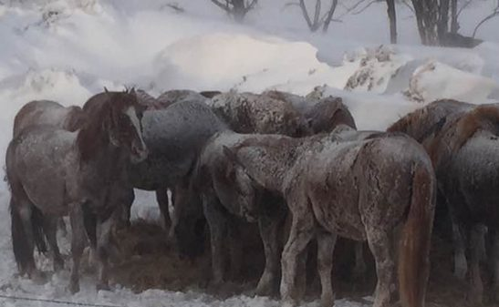 South Dakota Authorities File Motion for Ownership of Karen Sussman, ISPMB Horses
