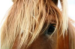 Horses May Assist Dementia Patients: Study