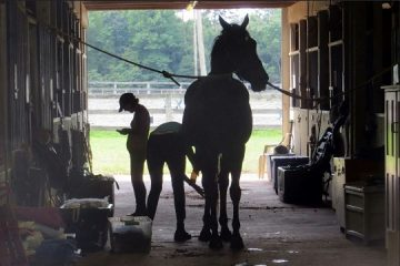 56 horses at Whispering Willow in Glendale is quarantined after EHV confirmed.
