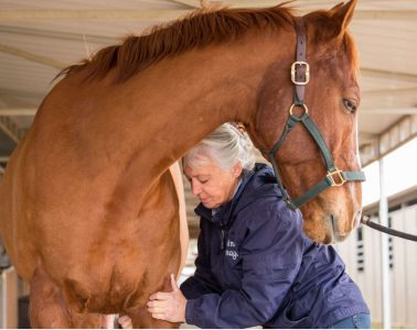 Equine Massage Therapists in Arizona don't have to be Vets