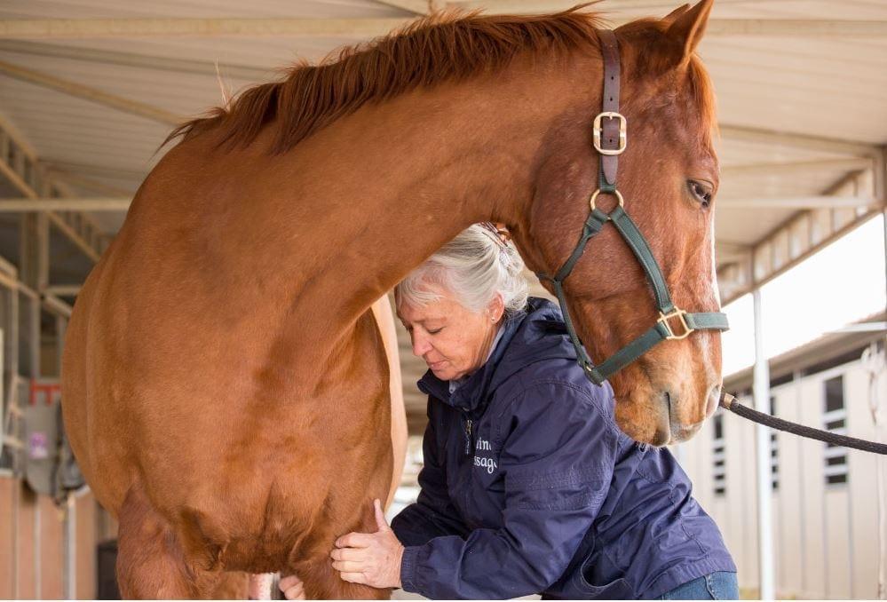 Arizona Equine Massage Therapist Wins Suit against Veterinary Board