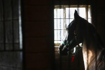 USDA Scrubs Website of Horse Abuse Information