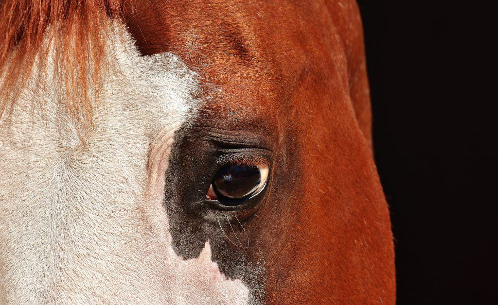5 Horse Rescue Skills Required for Success   Horse Authority