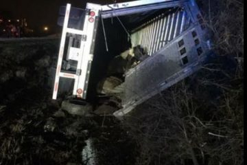 19 Horses Killed in Mississippi Traffic Accident