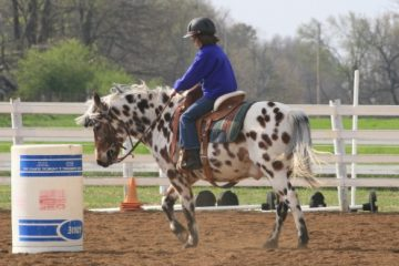 How to Make your child smarter? Horseback Riding a study says.