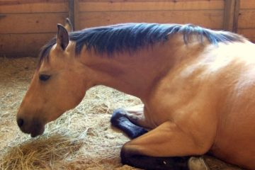 Maryland horse euthanized EHV-1 boarding stable