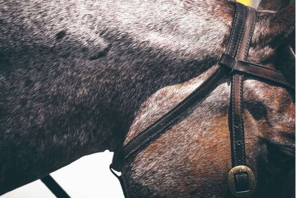 The AQHA Executive Committee approved several recommendations submitted by the AQHA Animal Welfare Commission.