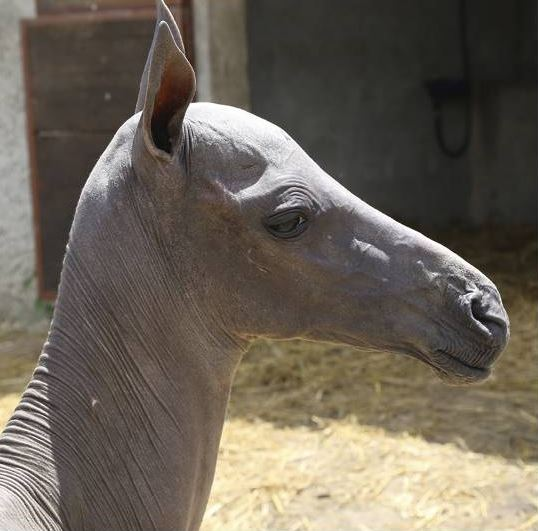 Hairless horse!https://ift.tt/2TmfNx1   Hairless animals