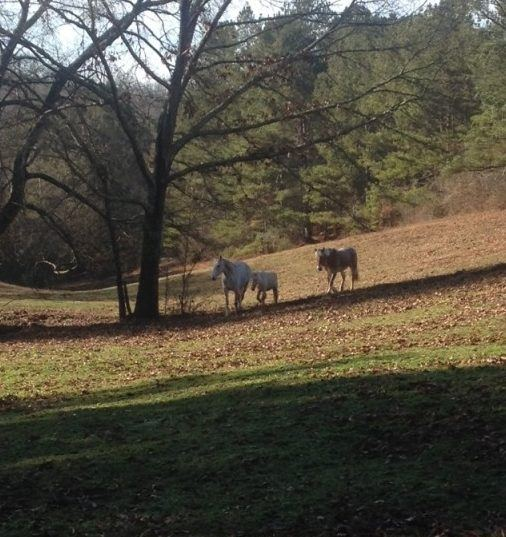 Angela Michelle Merrell is guilty for horse theft