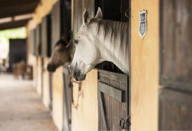 Hiring practices in the horse industry