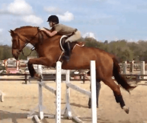 """The penalty he [Dr. Cardenas] received by the NCVMB isn't nearly enough,"" says Kimberly Ely, who owns the Dutch Warmblood."