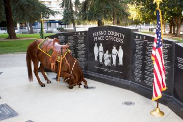 A new equine crime fighter named Justice is on duty for the Fresno County Sheriff's Mounted Patrol Unit.
