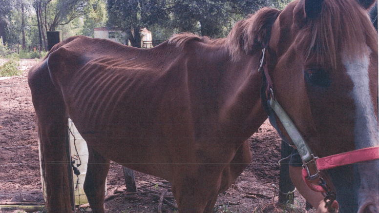 Florida 'Horse Rescuer' Charged with Animal Cruelty