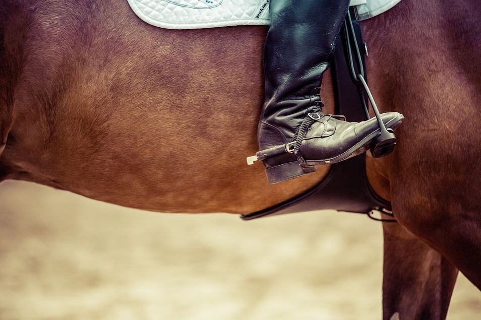 'Horse Killing' Means No Reinstatement for USEF Members UPDATE