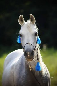 Central Virginia Horse Rescue - Pollyanna