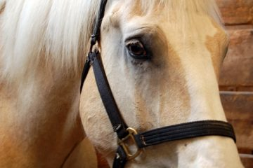 Virginia officials confirm a Culpeper horse was euthanized due to the equine herpes virus (EHV-1). They have quarantined the horse's originating farm.