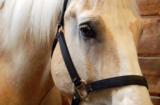 Virginia Horse Euthanized, Farm Quarantined: EHV