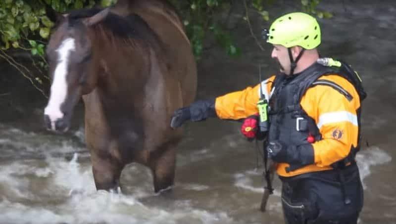 Harvey Flood Horses Headed to Auction | Horse Authority