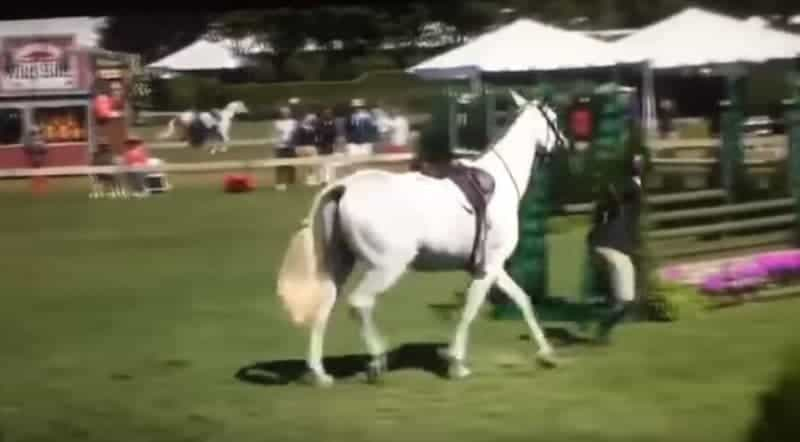 Johnson & Johnson Heir Focus of USEF Investigation - VIDEO