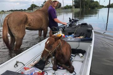 Hurricane Harvey Horses Endure as Irma Eyes Florida
