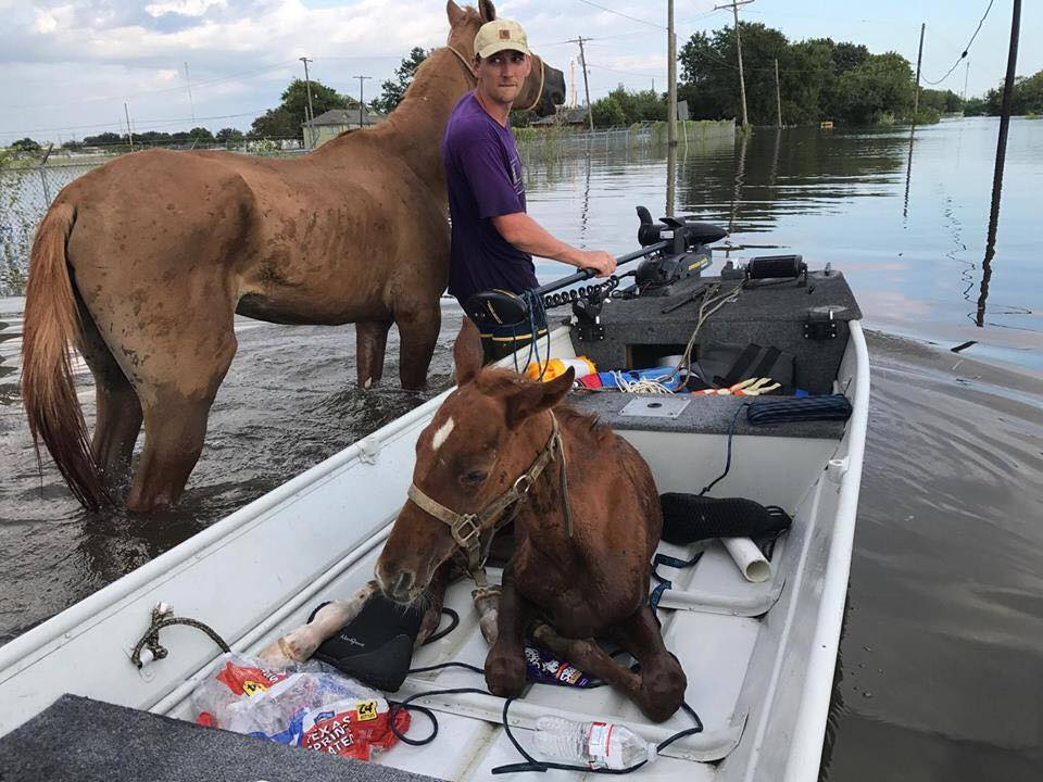 How to Find Horse Helpers after Irma Strikes Florida