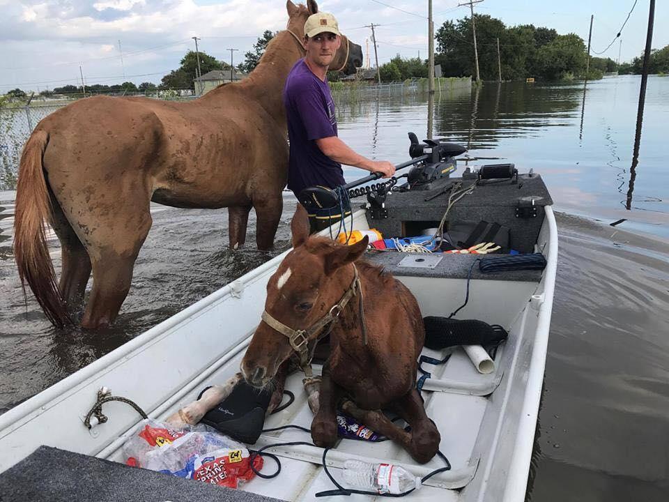 Hurricane Harvey Horses Endure as Irma Eyes Florida