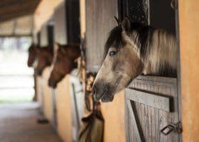 Horse Show Dads: Horses Can Improve Your Golf Game