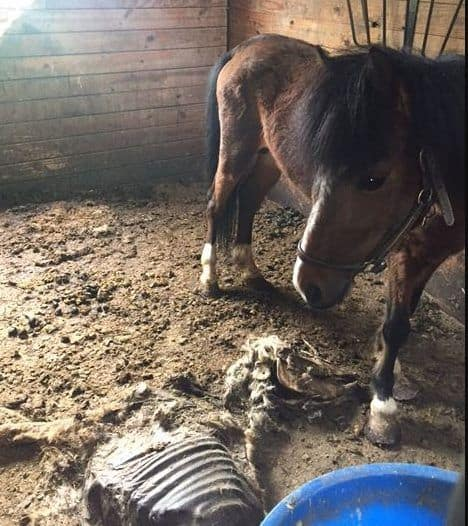 Jeanne Ryan MAX Jail Sentence and NO animal ownership for 15 years in New York animal cruelty case