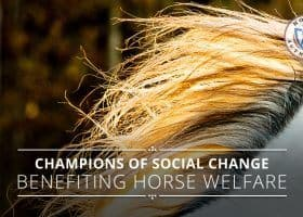 Horse Authority: Champions of social change for horse welfare