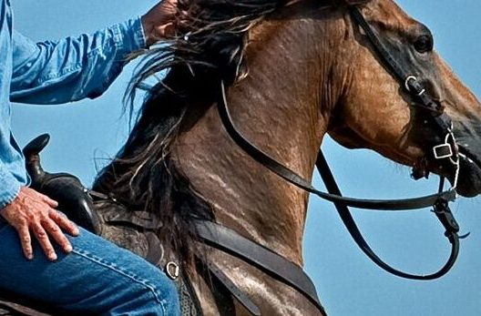Easy, Effective, Secure Horse Employee Screening - Horse Pre-Employment Background Check - Take control, mitigate yourrisk, and proceed with hiring confidence so you can get on with horse business!