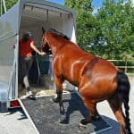 Featured Horse Trailer for Sale