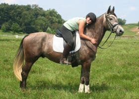 Life lessons taught training dressage horses