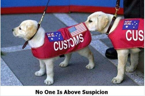 No one is above suspicion - $35 criminal background check at HorseAuthority.co