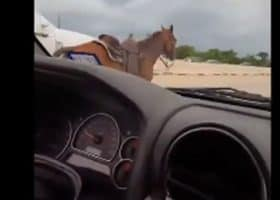 A cowgirl bodly saves a horse running down Texas highway - all caught on video.