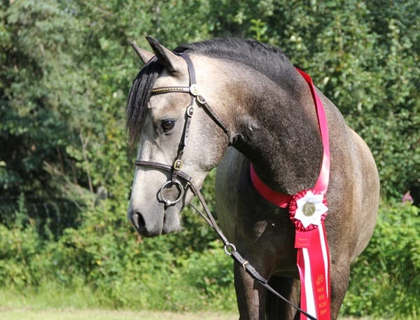 The Zen Approach to Buying Equine Insurance