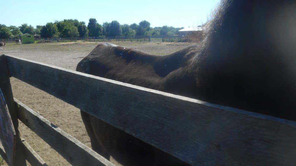 A horse allegedly neglected by Sarah Rabinowitz.